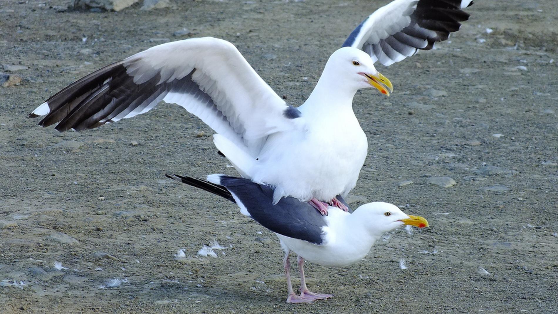 Las aves pueden identificar por el olor