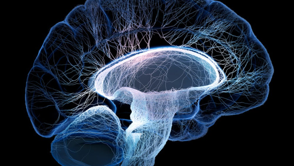 Bajo anestesia, los estados cerebrales s