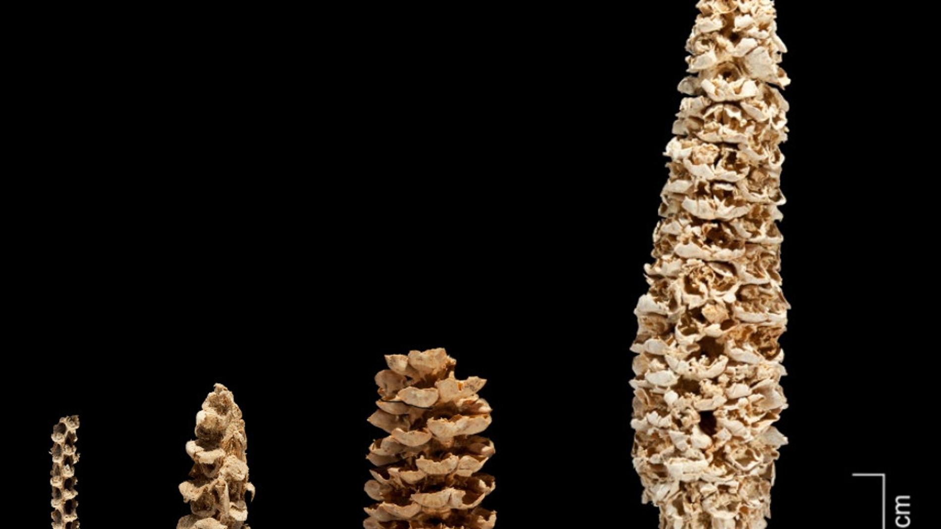 Un trabajo publicado en 'Nature Plants'