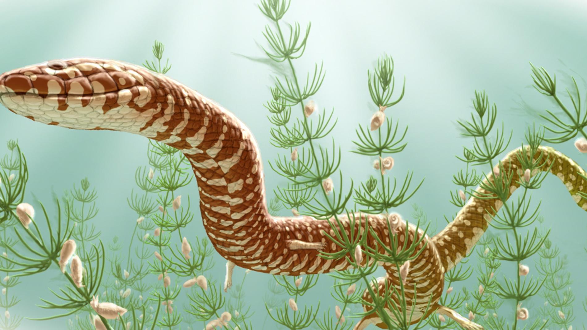 . Los nuevos fósiles retrotraen el prime