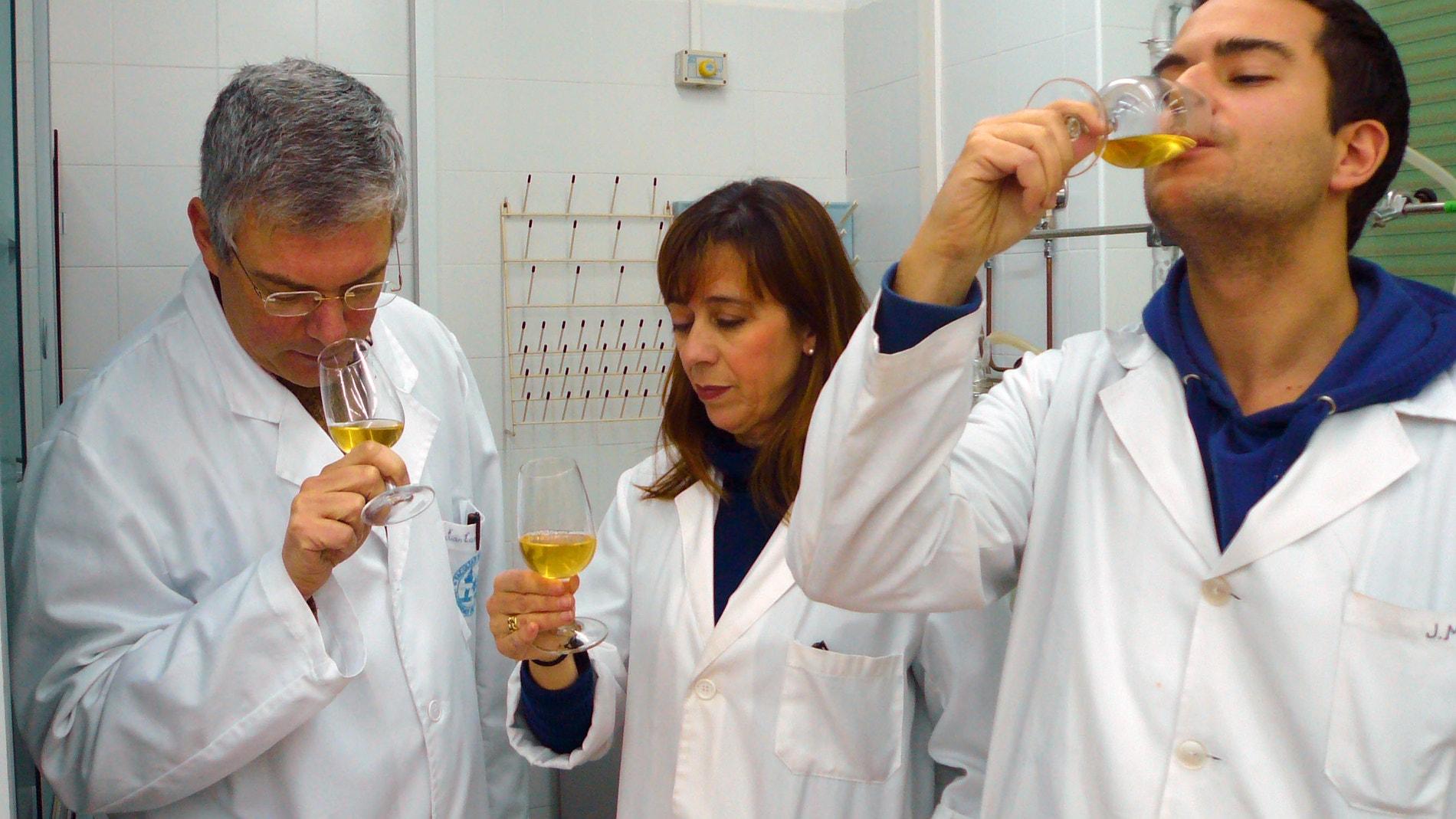 Investigadores del grupo Viticultura y E