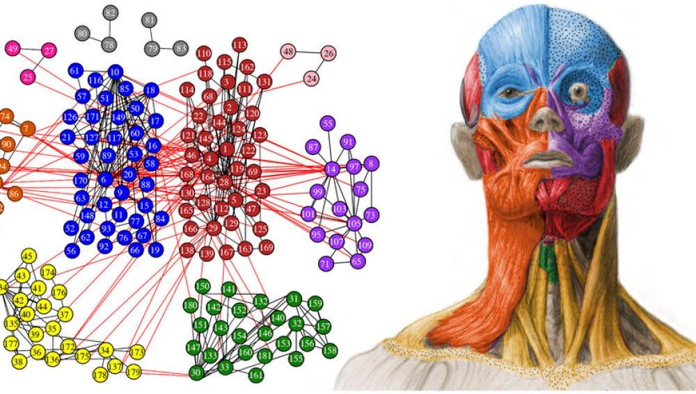 TECNOXPLORA   Primera estructura modular anatómica de la cabeza humana