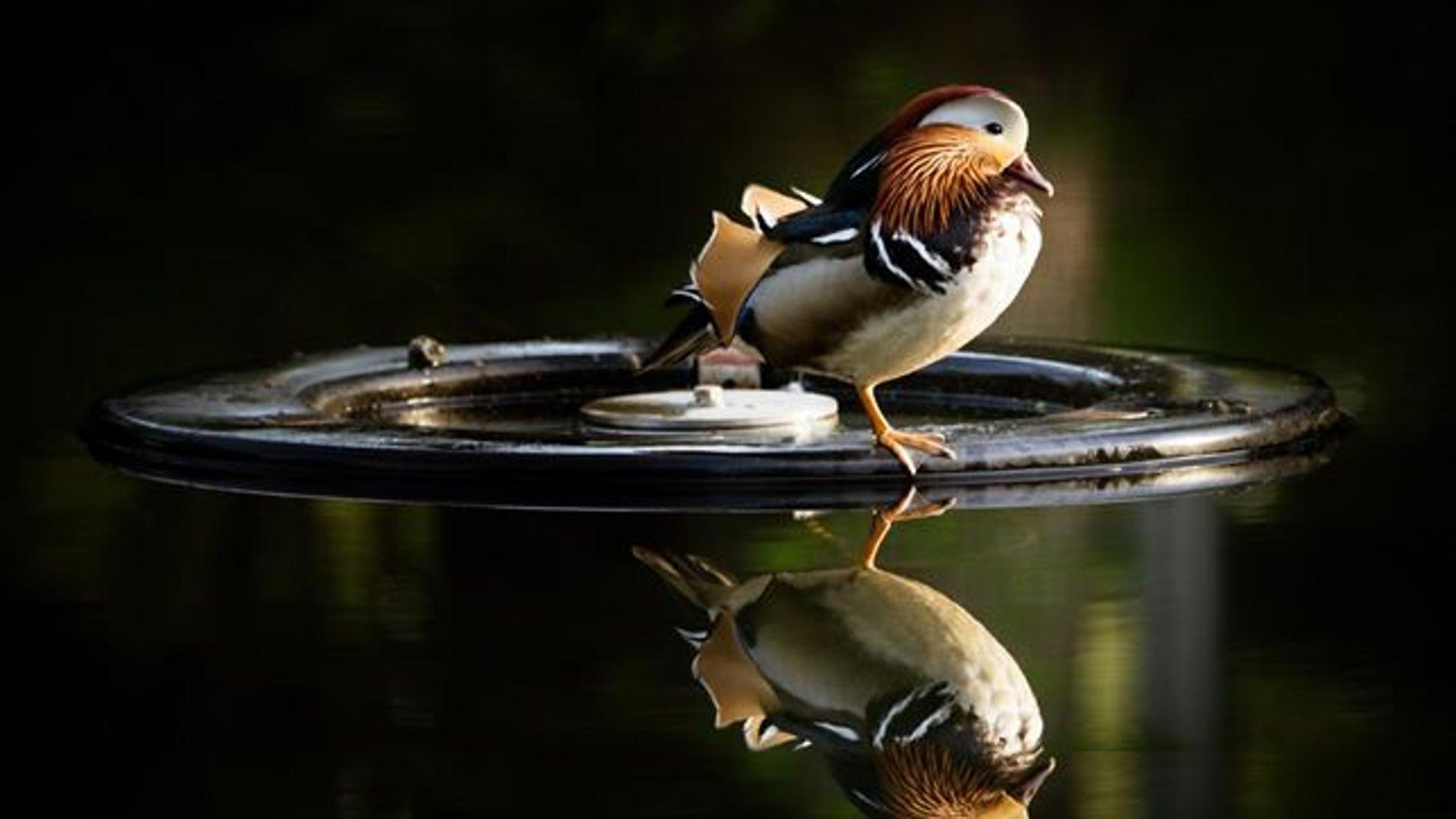 Un pájaro se refleja sobre un lago