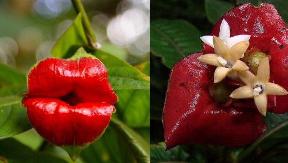TECNOXPLORA | Antropomorfismo en el reino vegetal: plantas que son ...