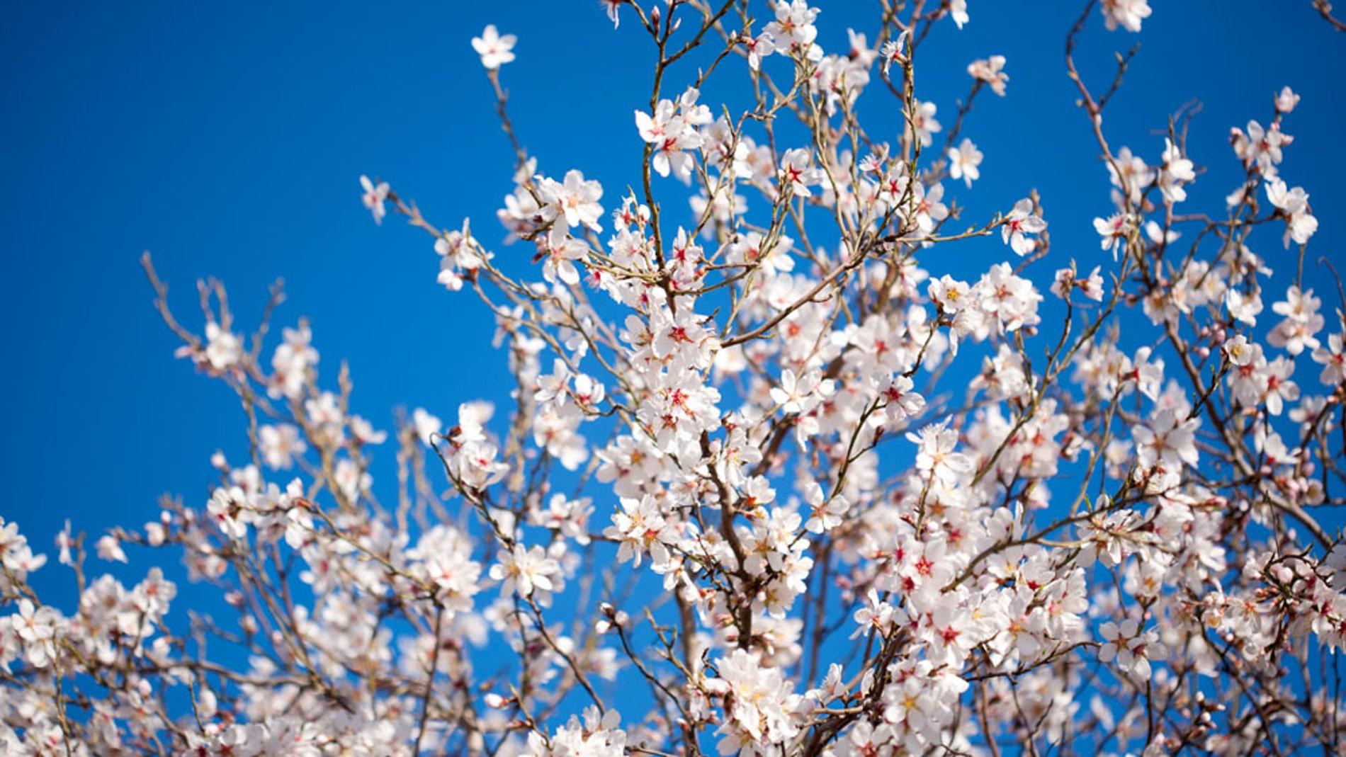 10 curiosidades científicas de la primavera