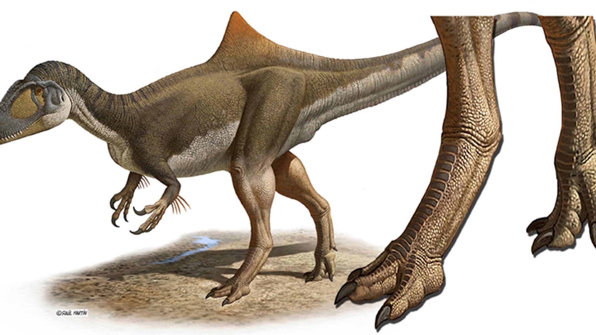 Los dinosaurios carnívoros tenían los pi