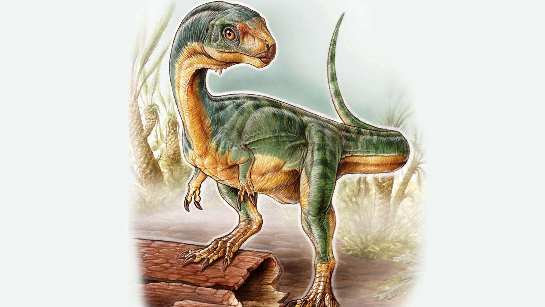 Nuevo terópodo, mitad puma, mitad T-Rex