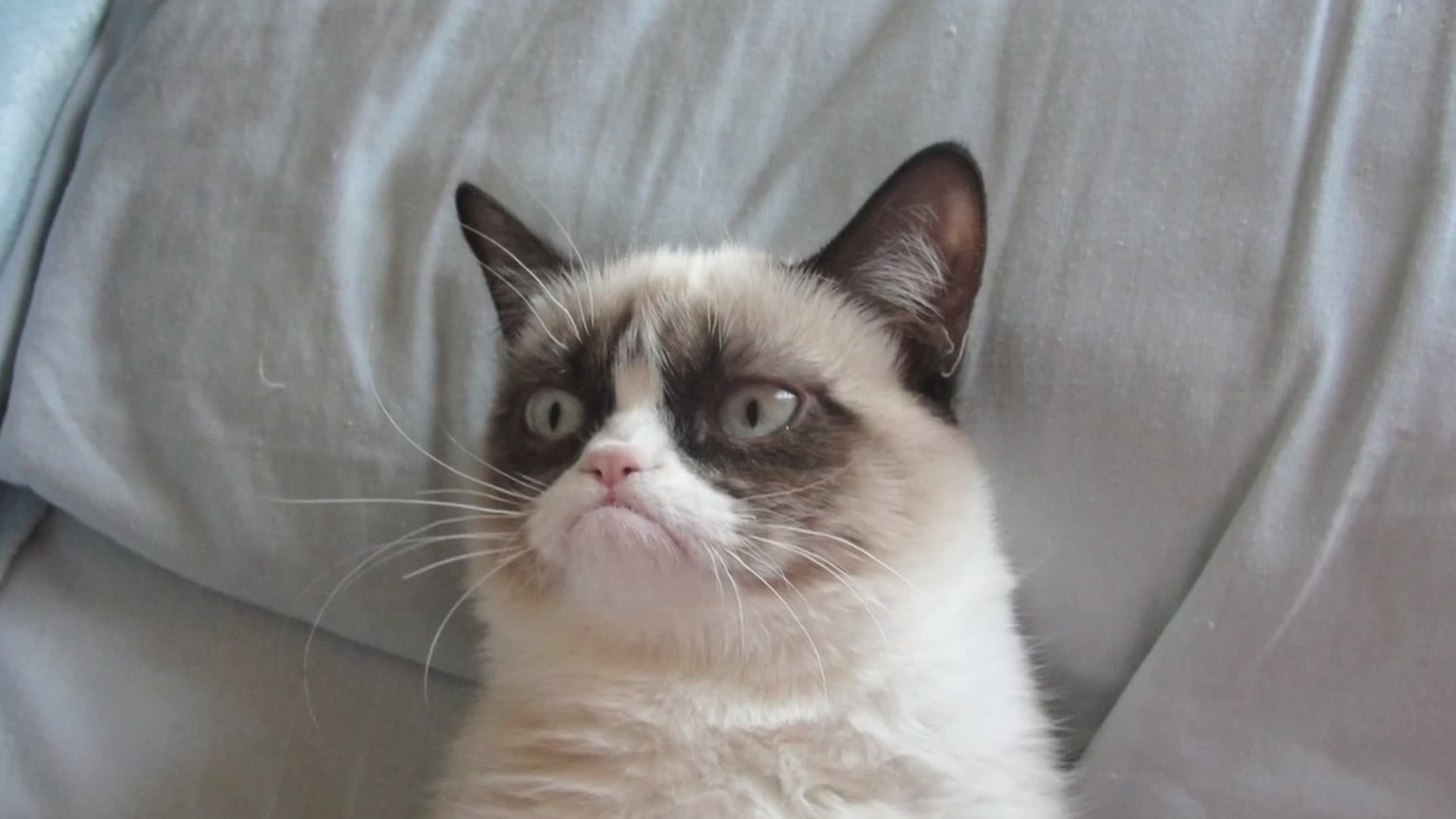 Grumpycat, todo un clásico de la red