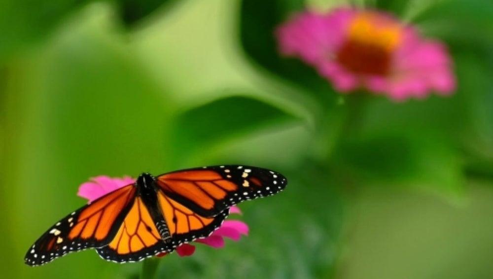 Nace el Primer Plan de Conservación para  4.200 especies de mariposas