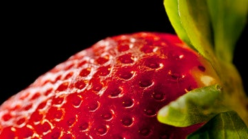 Las raíces, tallos y hojas de las fresas