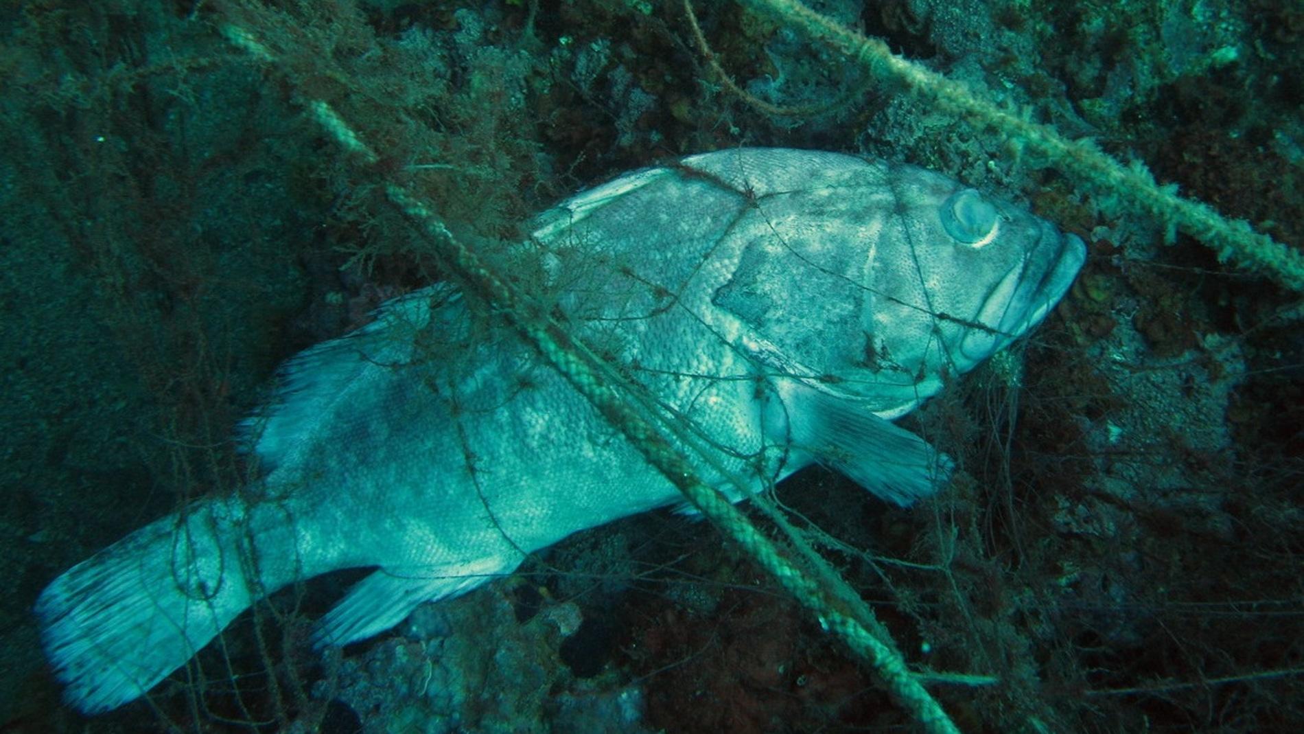 Las artes de pesca enrocadas en los fond