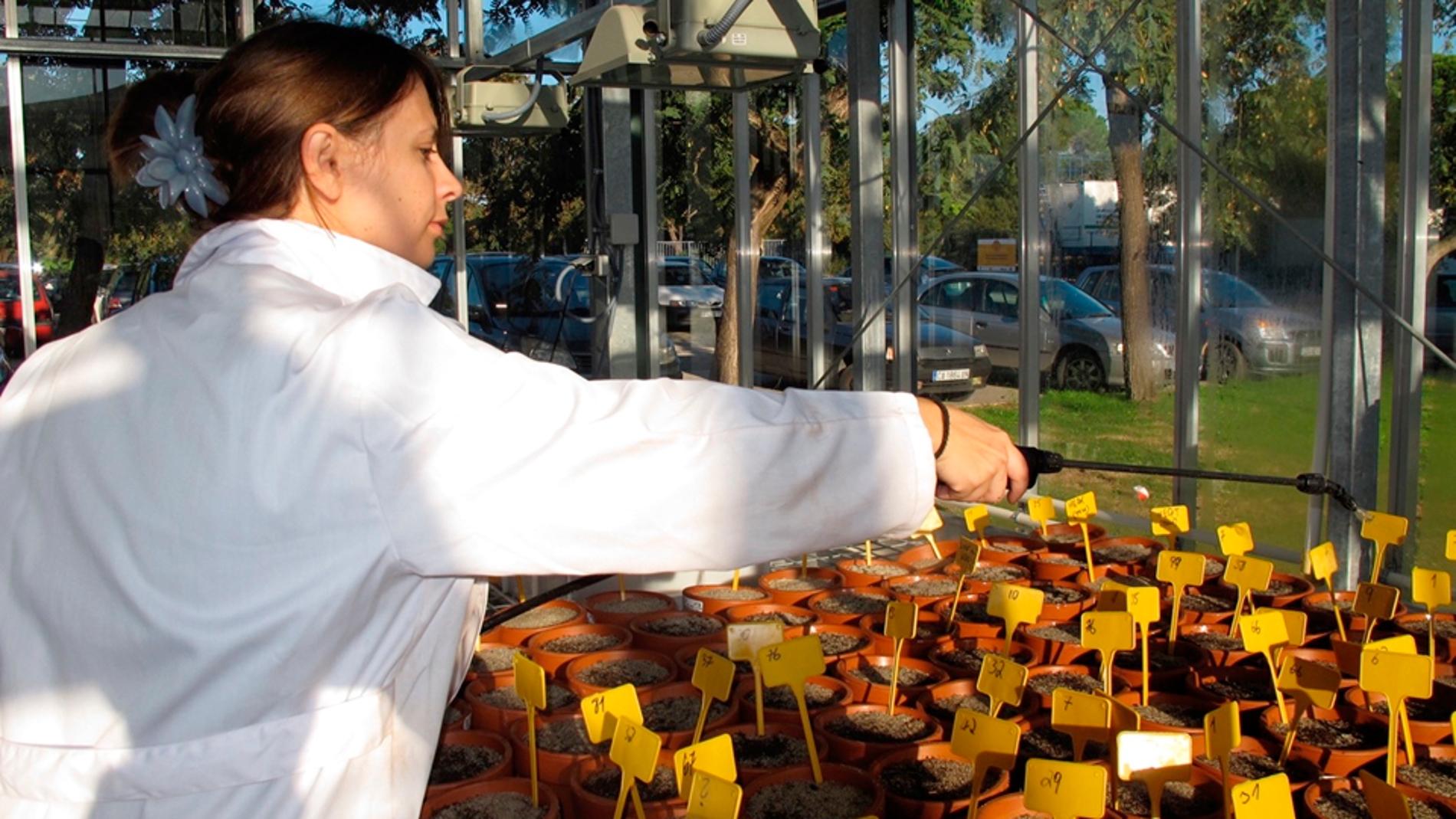 María Paniw, trabajando en el invernader