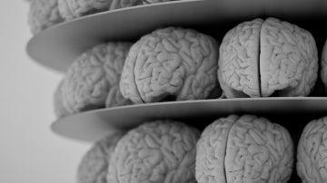 Unos cuantos cerebros apilados