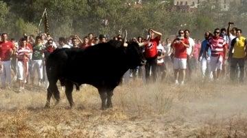 Imagen de 'El Toro de la Vega'