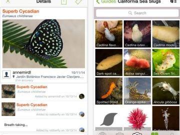 Aplicación iNaturalist