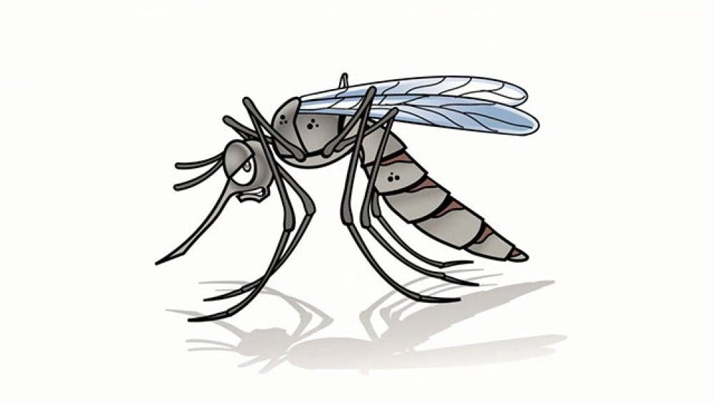 Cómo ganar la batalla al mosquito zumbón de las noches de verano