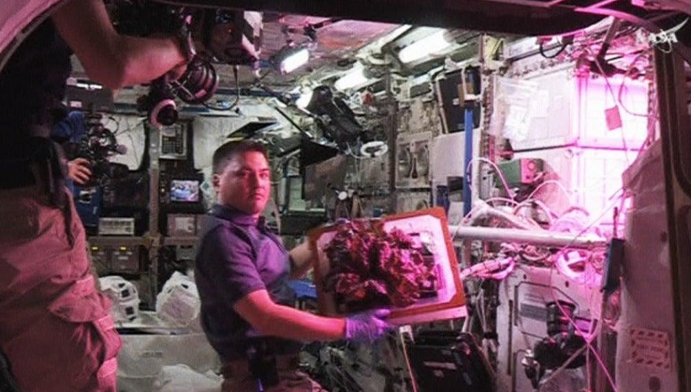 Astronauta con la lechuga
