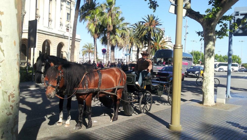 Carrozas de caballos en Barcelona