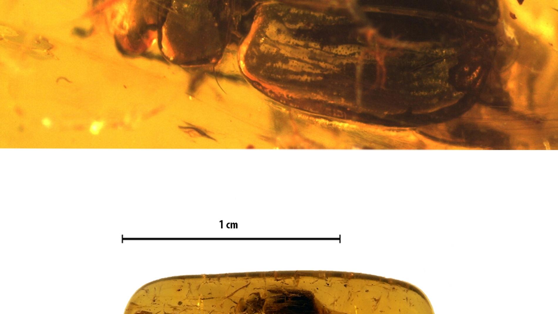 La imagen superior muestra la vista dors