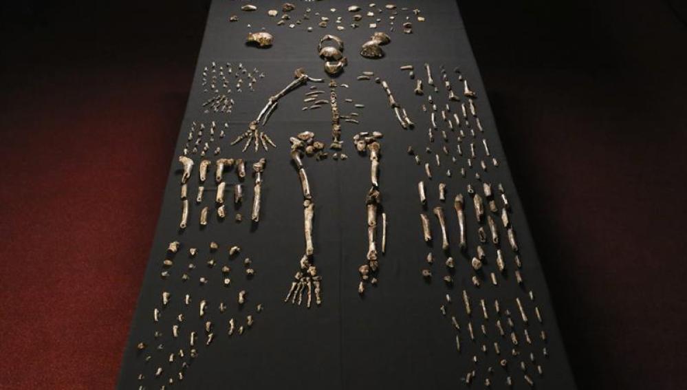 Restos del 'Homo Naledi'