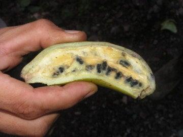 Banana salvaje