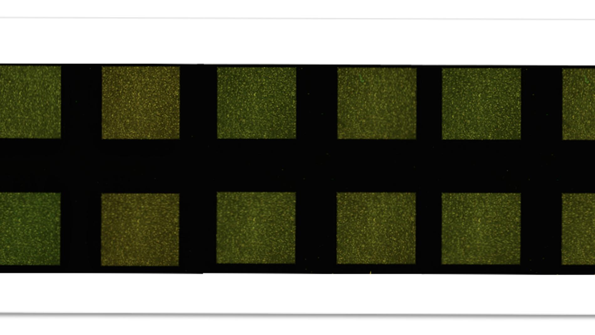Microarray desarrollado por qGenomics