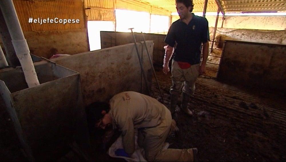 'El Jefe' de Copese ayuda a desatrancar las granjas