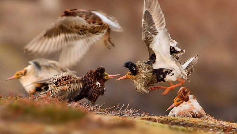 Pájaros en exhibición