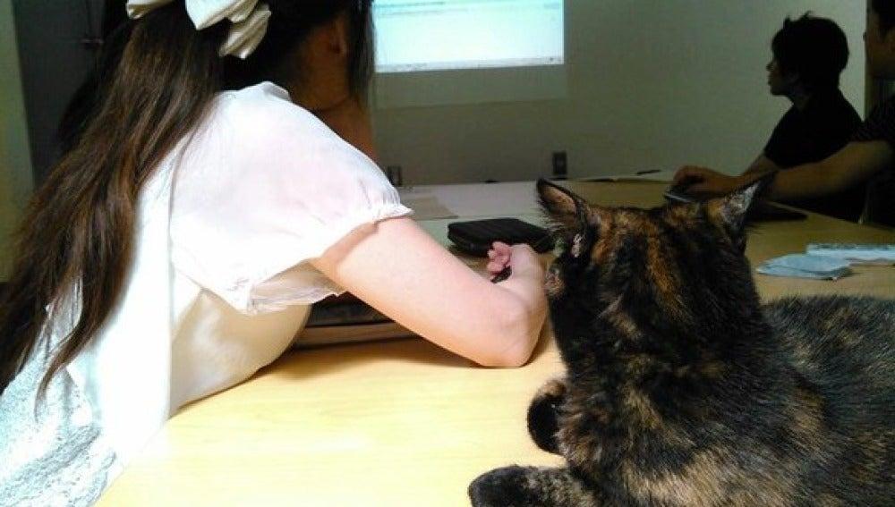 Un gato asistiendo a una reunión