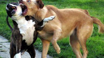 Perros peleando