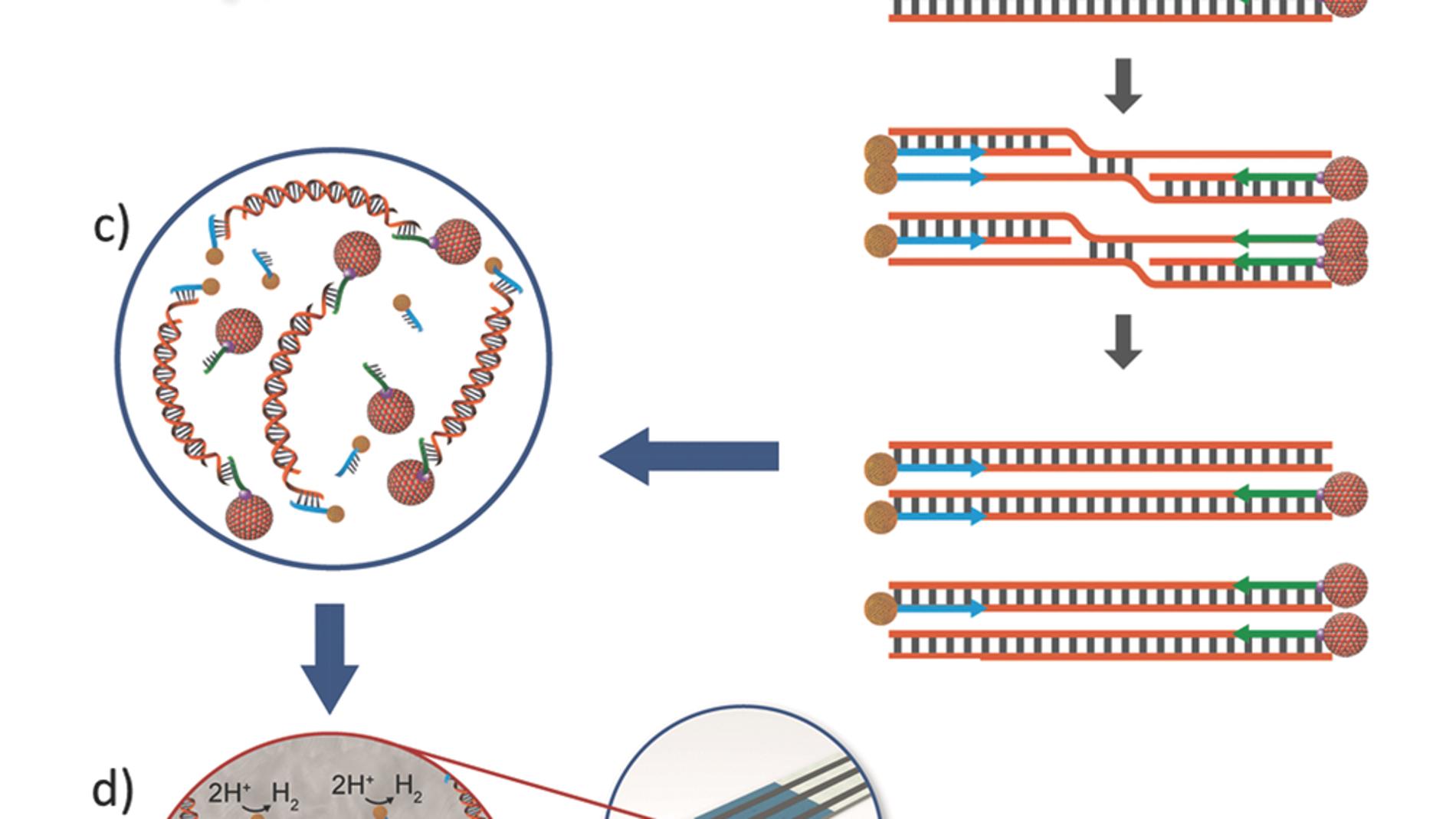 Amplificación isotérmica de ADN con nano
