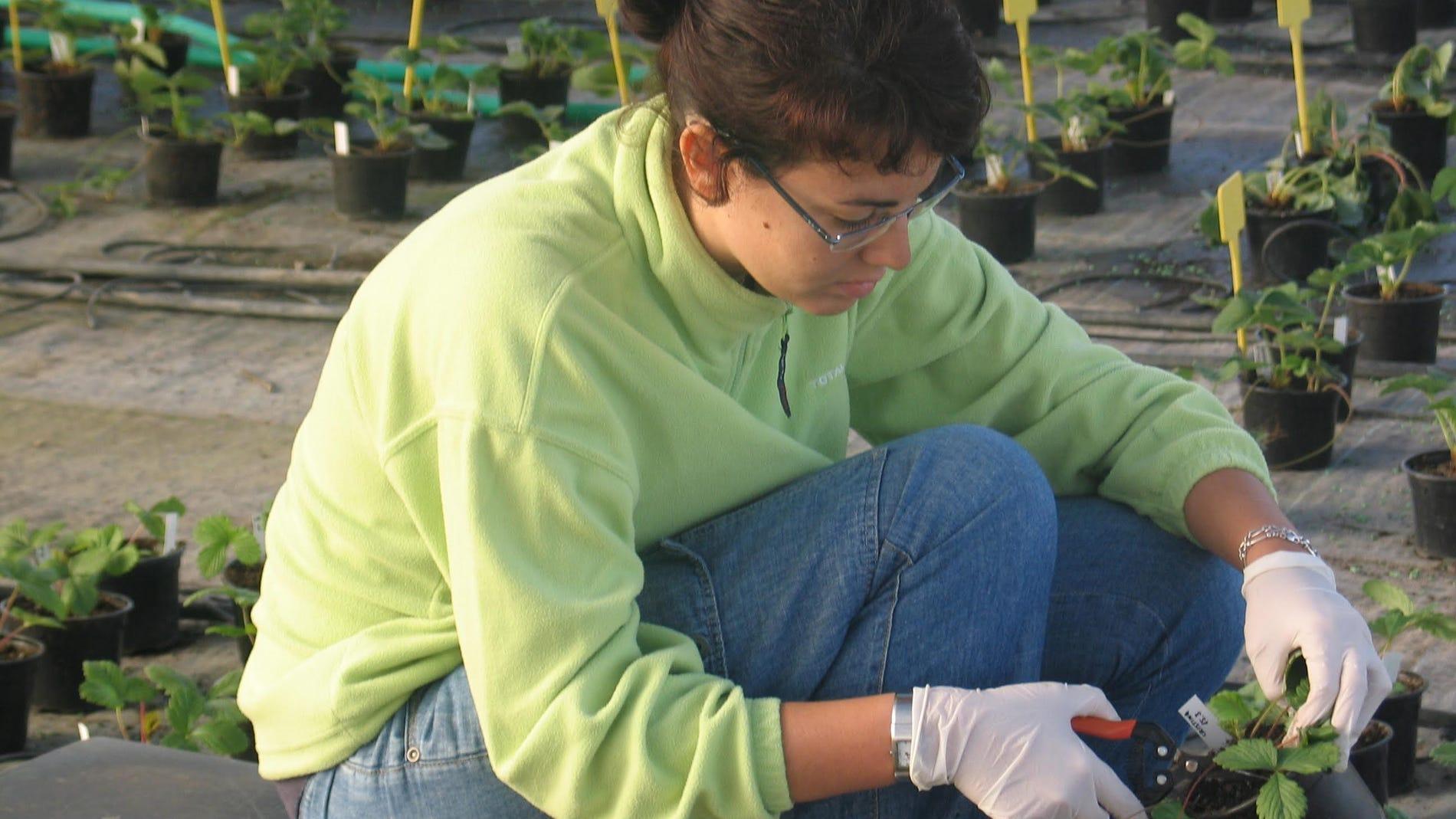 Investigadora tomando muestras de la pla