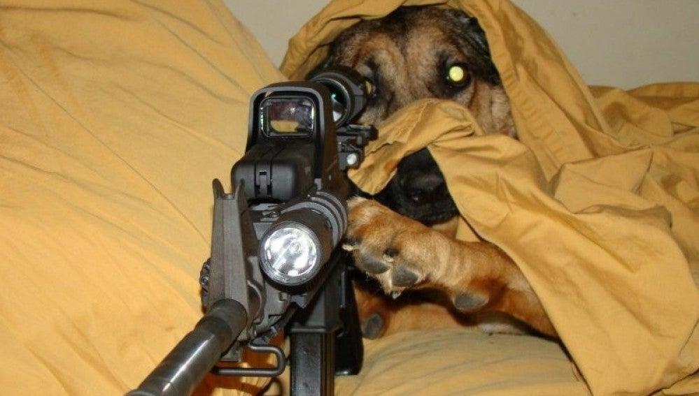 Imagen de archivo de un perro con un arma
