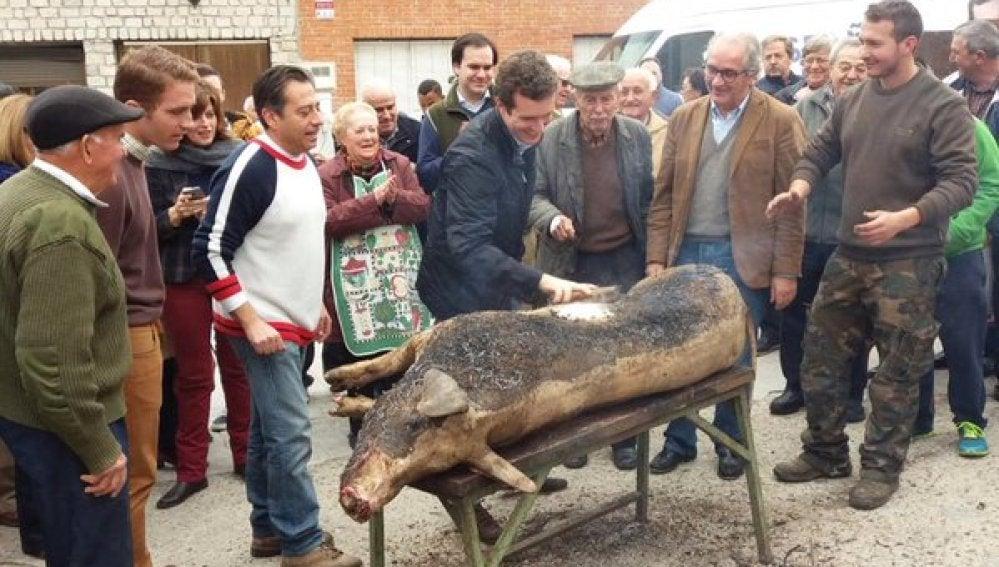 Pablo Casado, durante la matanza del cerdo en Ávila