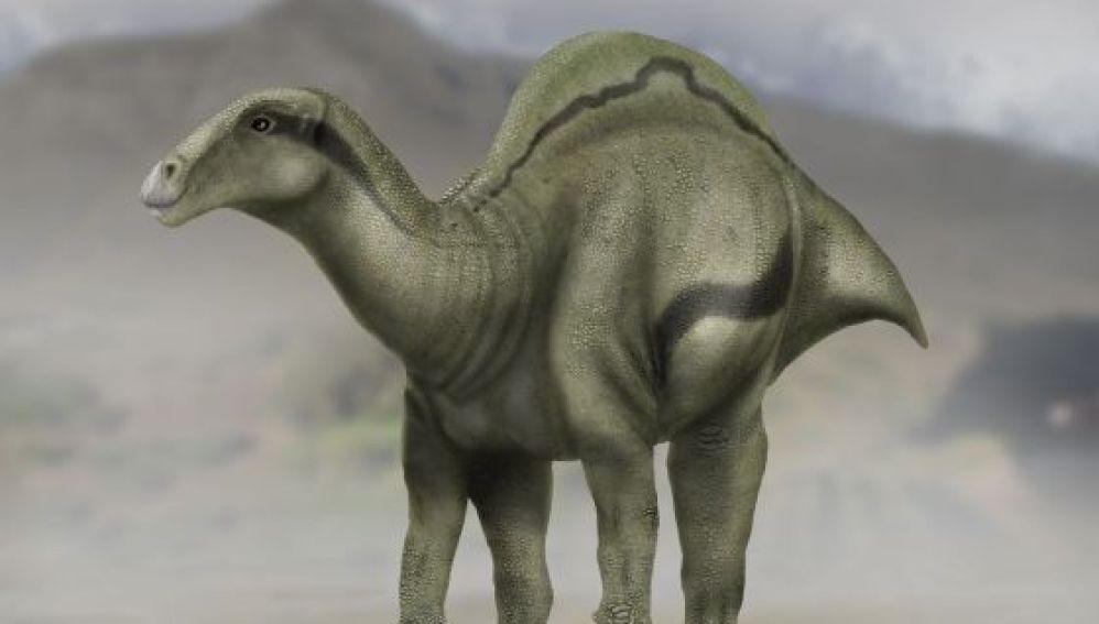 Reconstrucción del dinosaurio `Morelladon beltrani´ descubierto en Morella