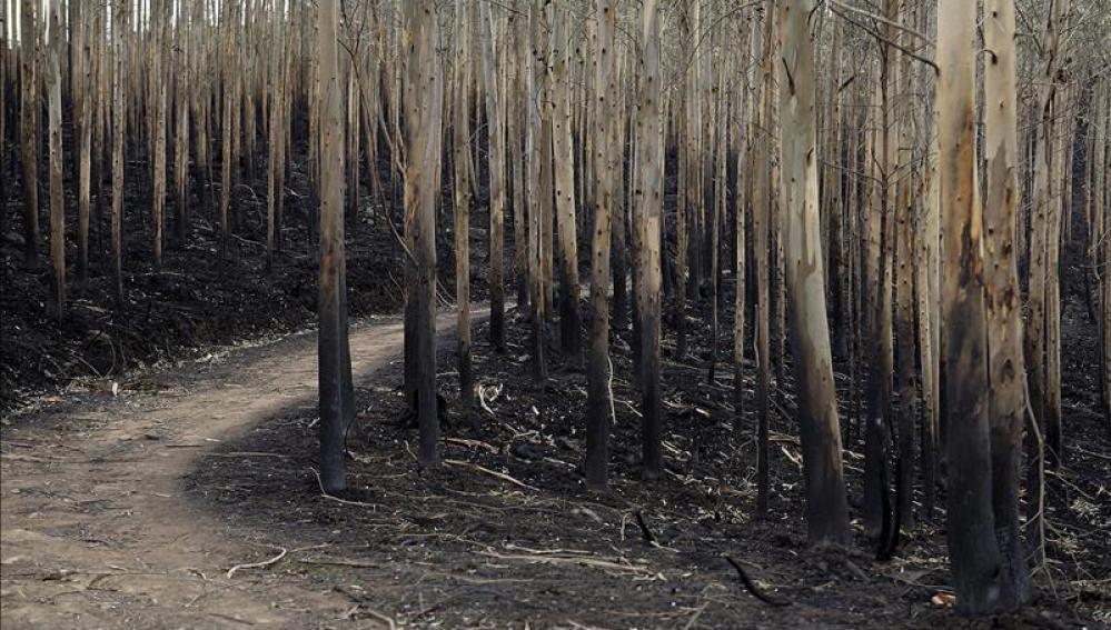 Uno de de los montes cántabros que se vieron afectados por los incendios forestales