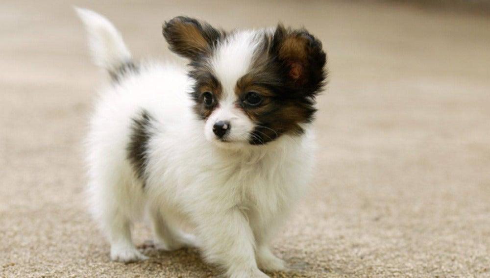 Un pequeño cachorro