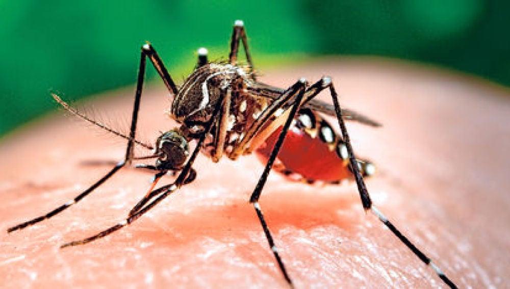 Se confirma que un recién nacido en Hawái con daño cerebral estaba infectado del virus Zika