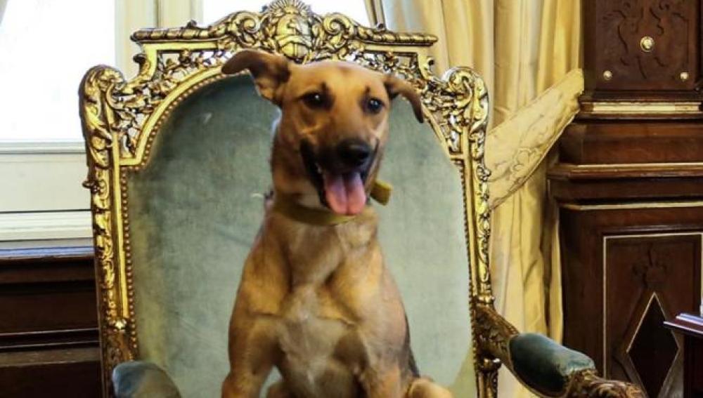 Balcarce, el perro de Mauricio Macri
