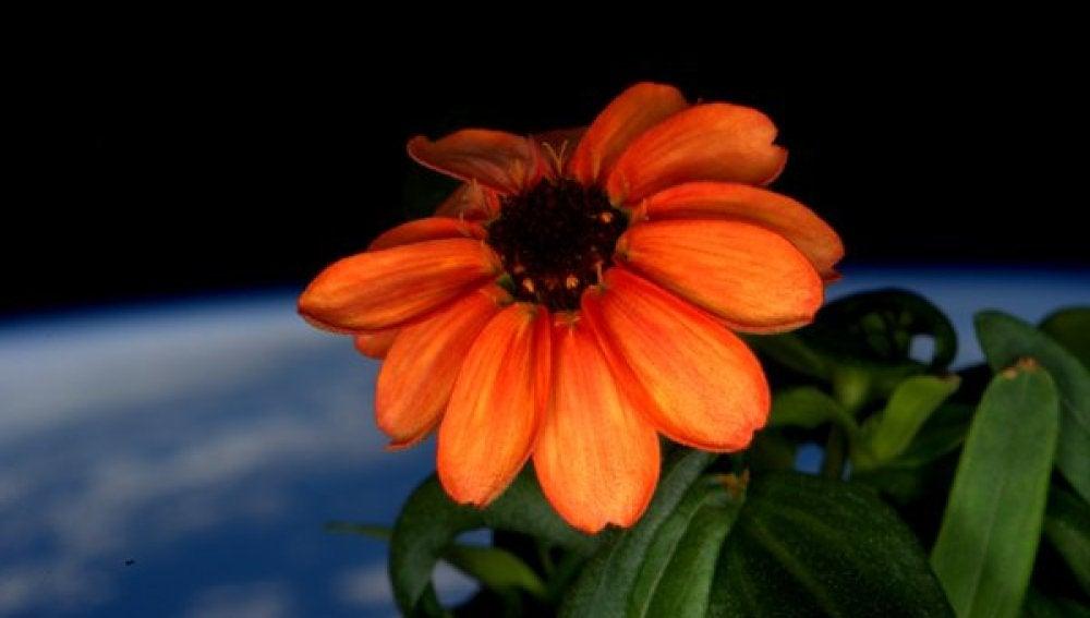 El astronauta Scott Kelly ha ido publicando cada día fotos de la flor