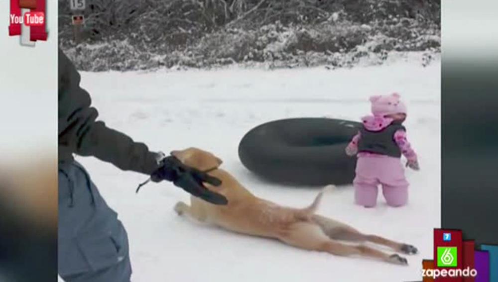 Un perro le roba el protagonismo a un bebé