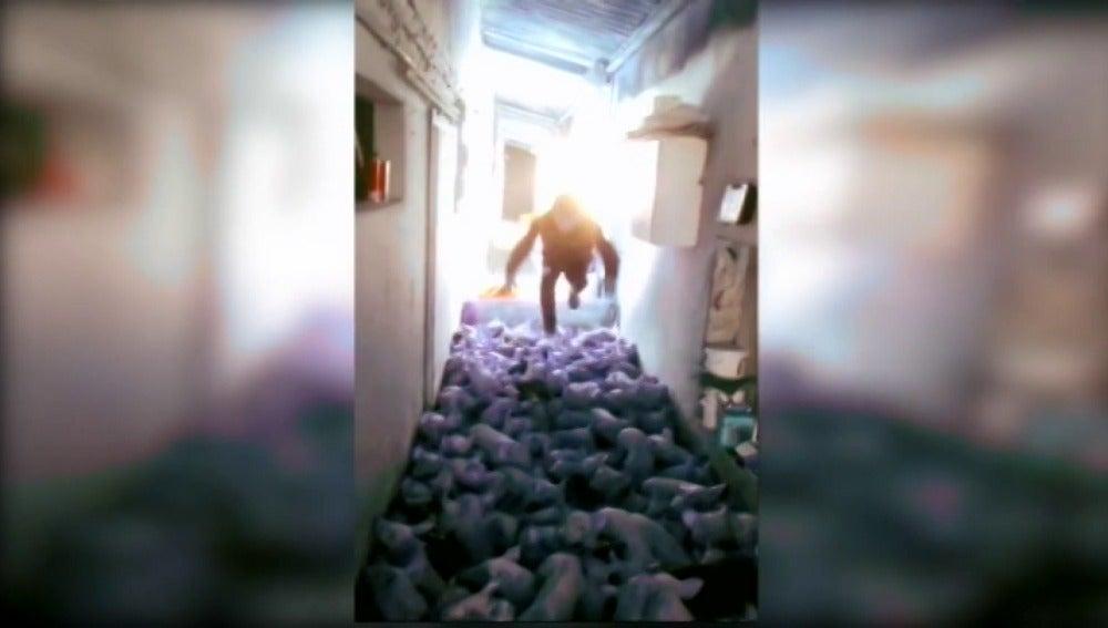 Fotograma del vídeo de un joven saltando sobre unos lechones