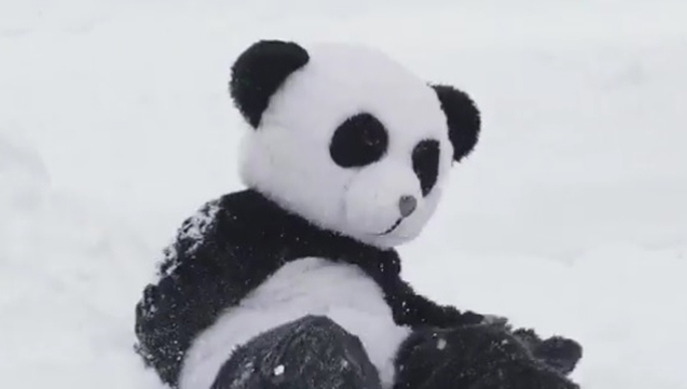 Un hombre disfrazado de panda