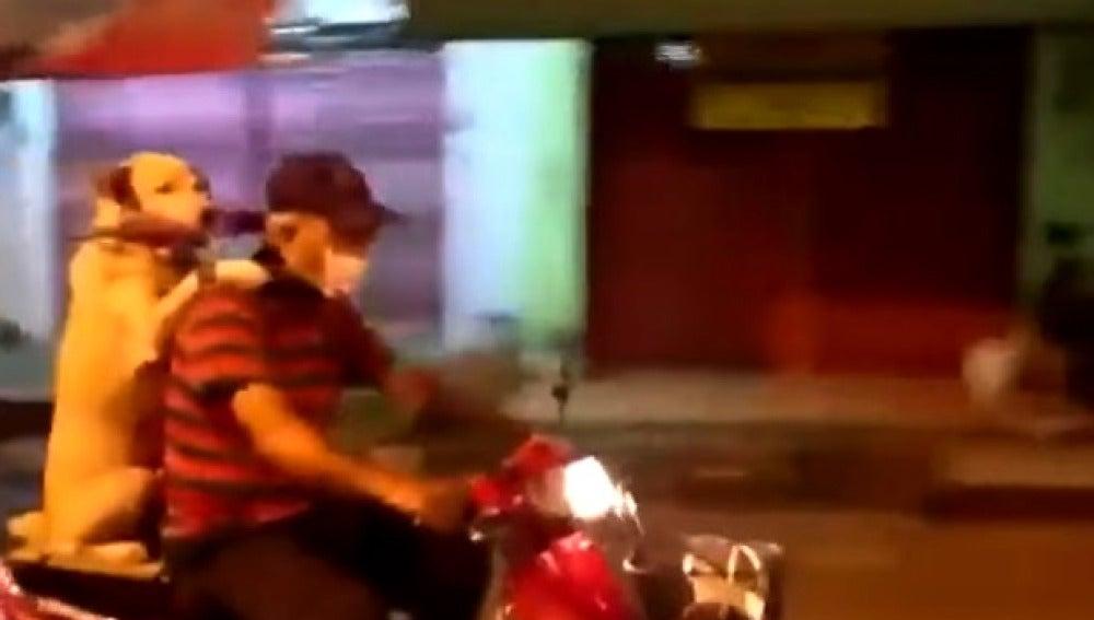 Un perro subido a una moto en Tailandia