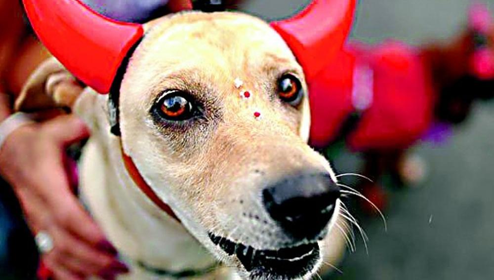 Un perro disfrazado de diablo