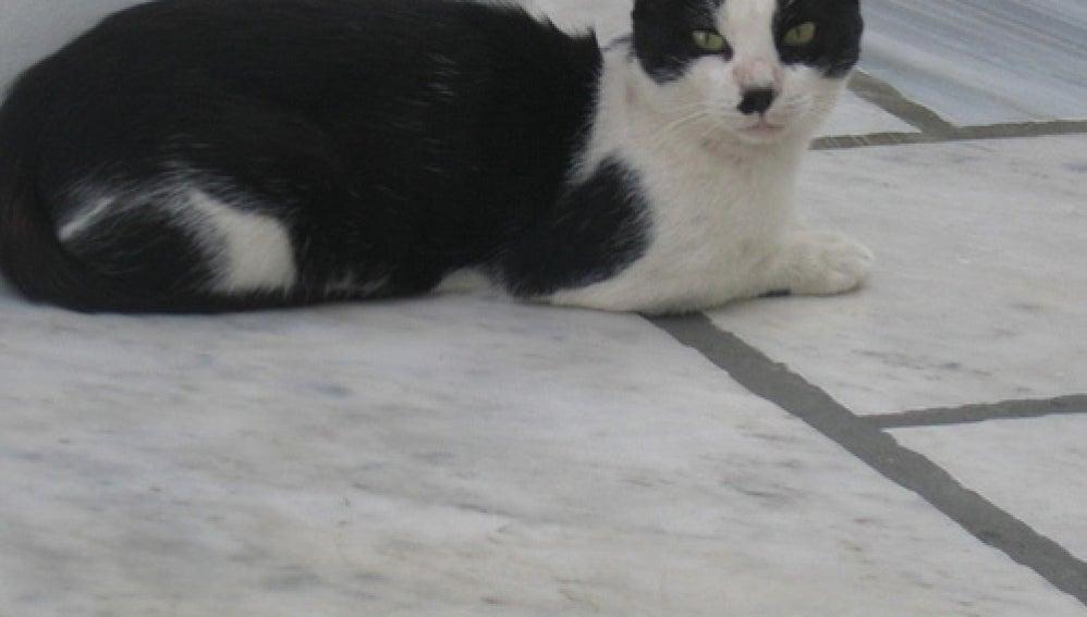 Un gato con un bigote más que sospechoso