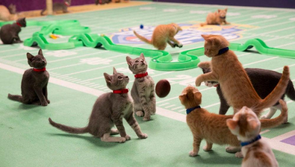 Gatitos compitiendo en la edición pasada de la Kitten Bowl