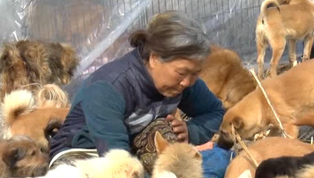 Una mujer coreana cuida de cientos de perros