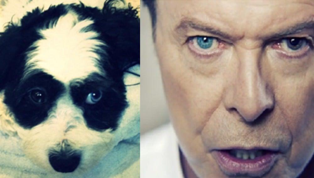 David Bowie y su perro Max