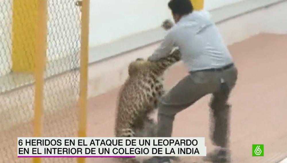 Ataque de un leopardo en un colegio indio